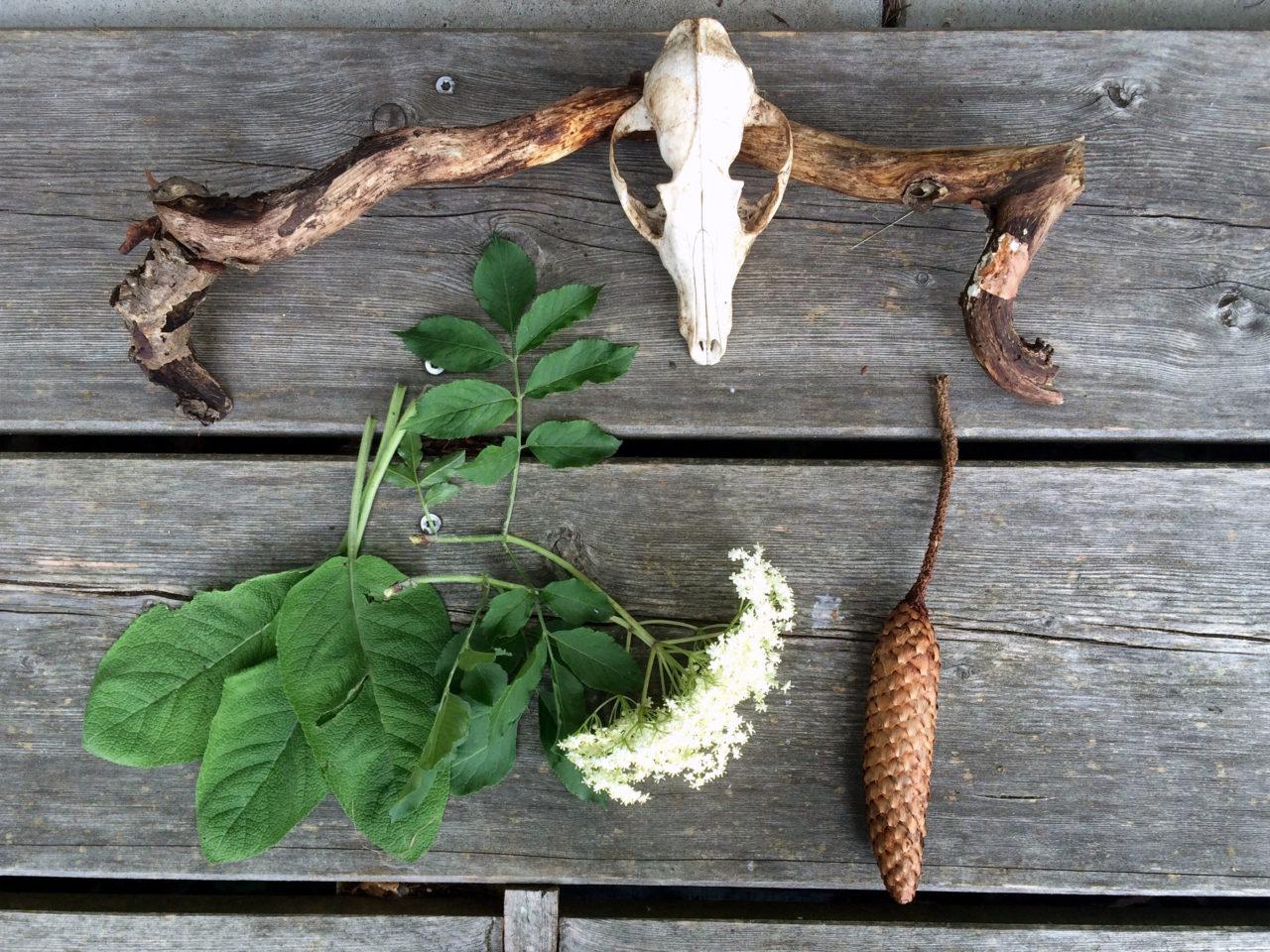 Fundstücke beim Tag der Achtsamkeit im Wald: Tierschädel