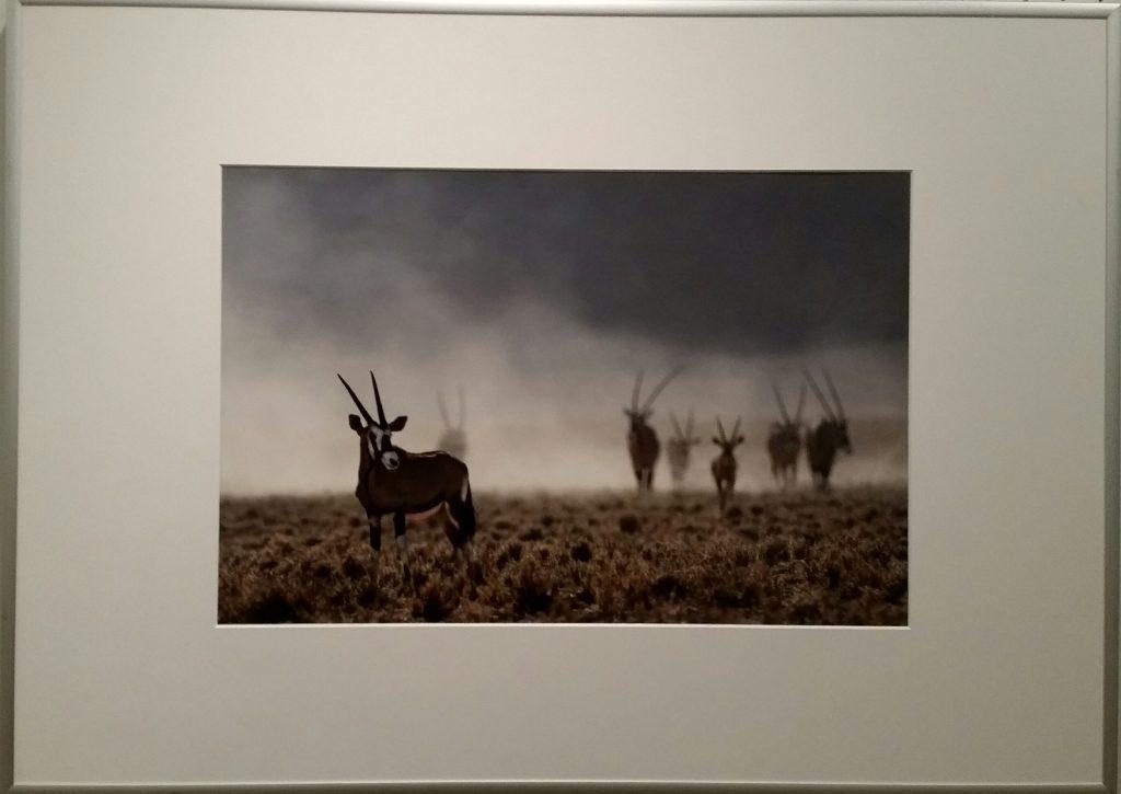 Fotofreunde Parsberg: Lambert Heil: Afrika I.