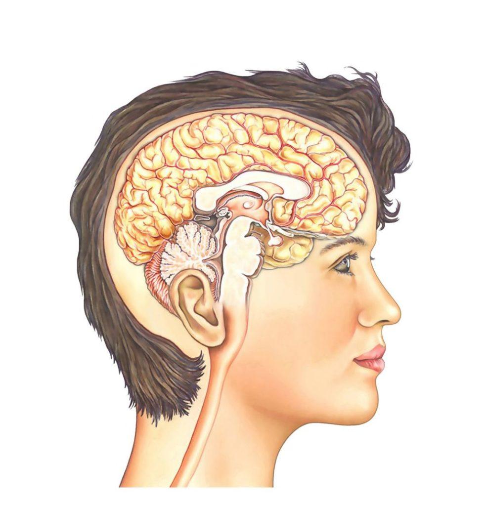 Das Menschliche Hirn: Komfortzone verlassen fängt hier an