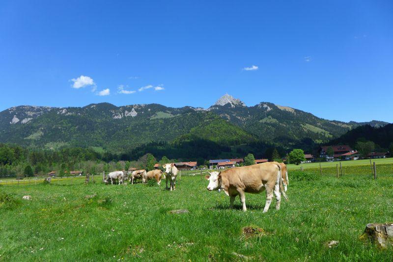 Bäuerliche Landwirtschaft