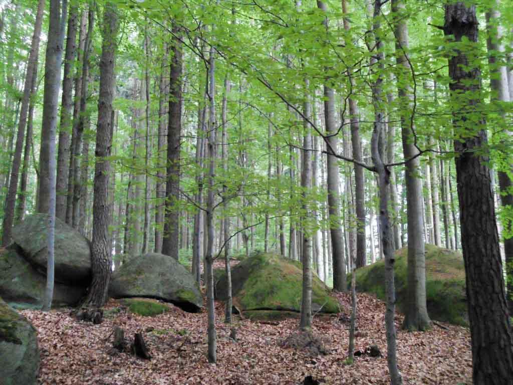 Granit im Waldviertel