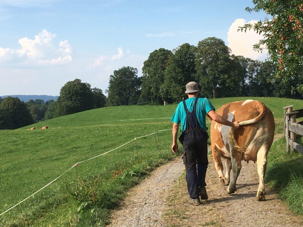 Fotowettbewerb Milchhof - lebendige Viehwirtschaft auch auf kleinen Höfen
