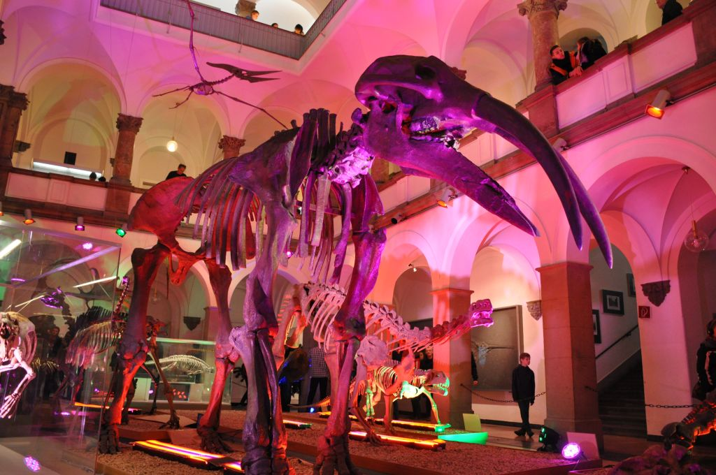 Museumsnacht München Paläontologisches Museum © Maren Köhler