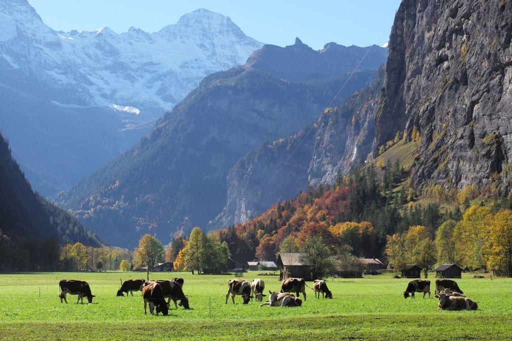 Kulturlandschaft Alpen - Panorama mit Kühen Hug, Beat