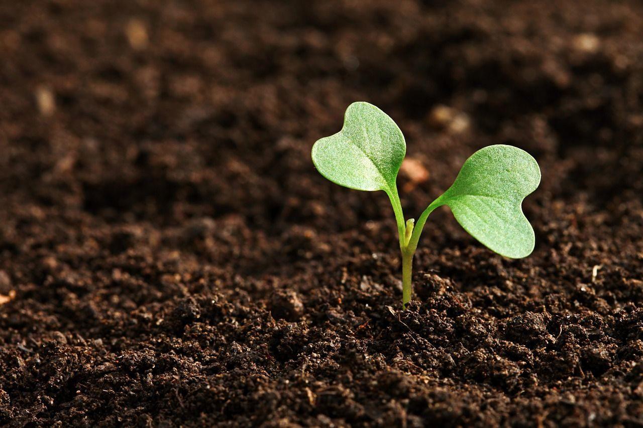 Wissenschaftstage am Tegernsee - Humusboden – wichtige, schützenswerte Ressource weltweit