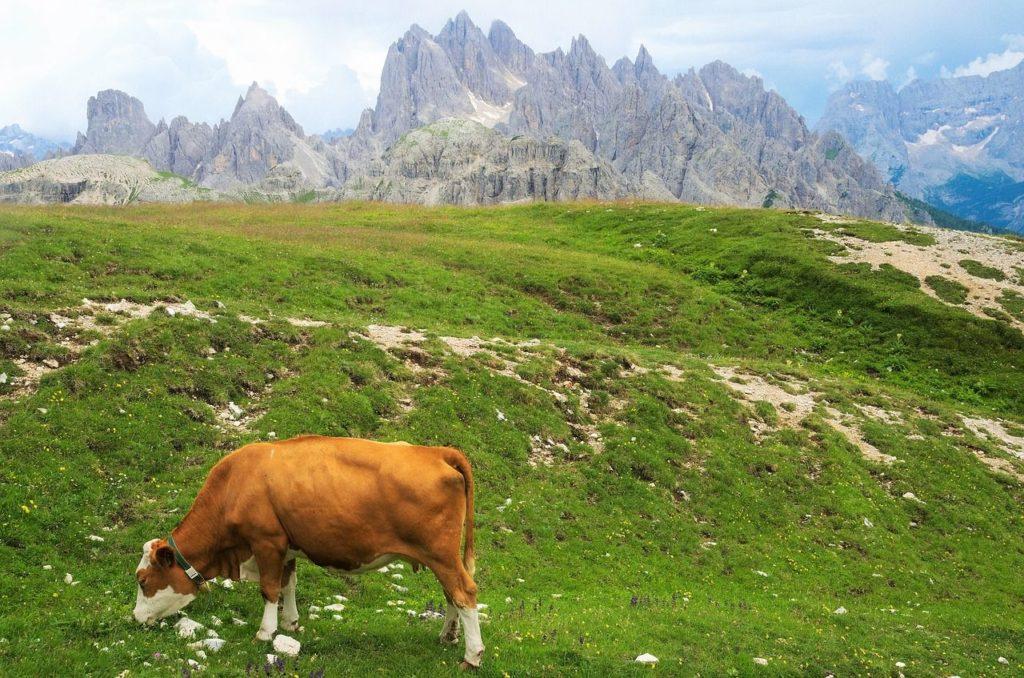 Alpiner Humusboden auf einer Höhe von 1.300 bis 2.000 Metern