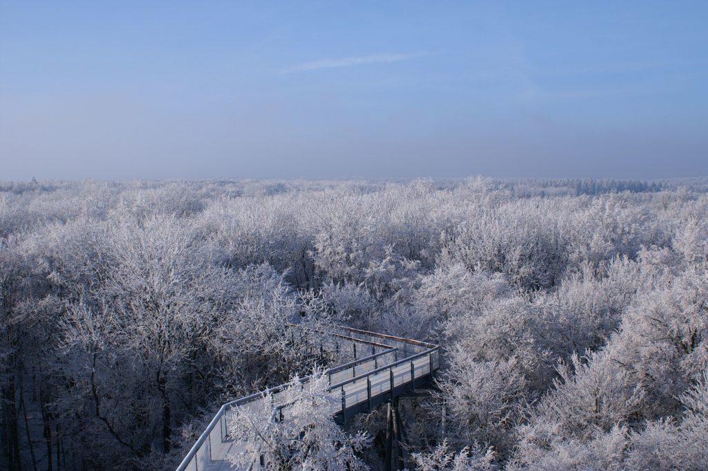 Baumkronenpfad Hainich im Winter
