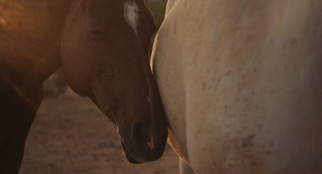 Innige Momente - Las hermanas de Rocinante ein Film der EVOLUTION FILM