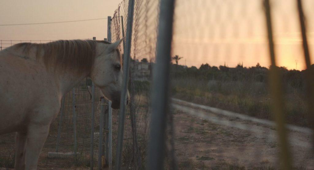 Die Pferderetterin- Spaniens vergessene Tragödie - ein Film von Alexandra Kaufmann