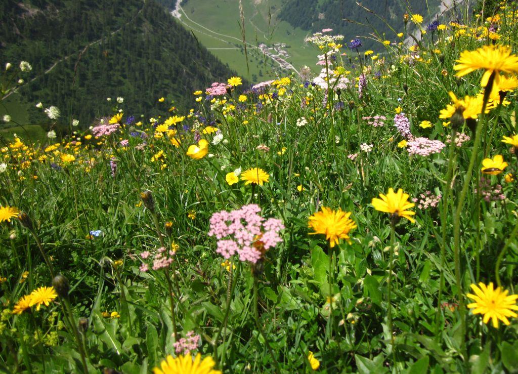 Artenreiche Wiesen gegen das Artensterben