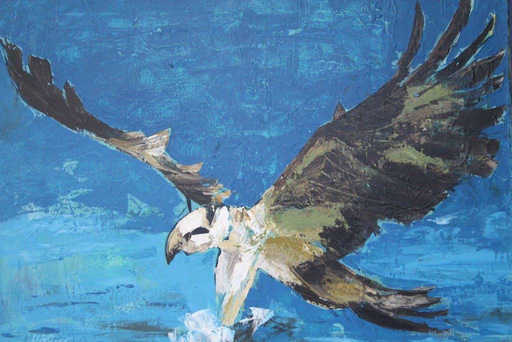 """Fischadler"" Foto: Karin Sommer"