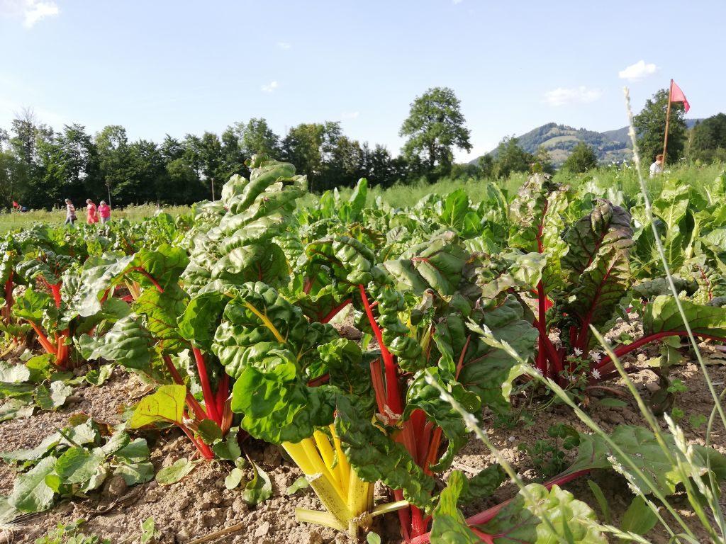 Üppiges Wachstum ohne Kunstdünger und Pestizide.
