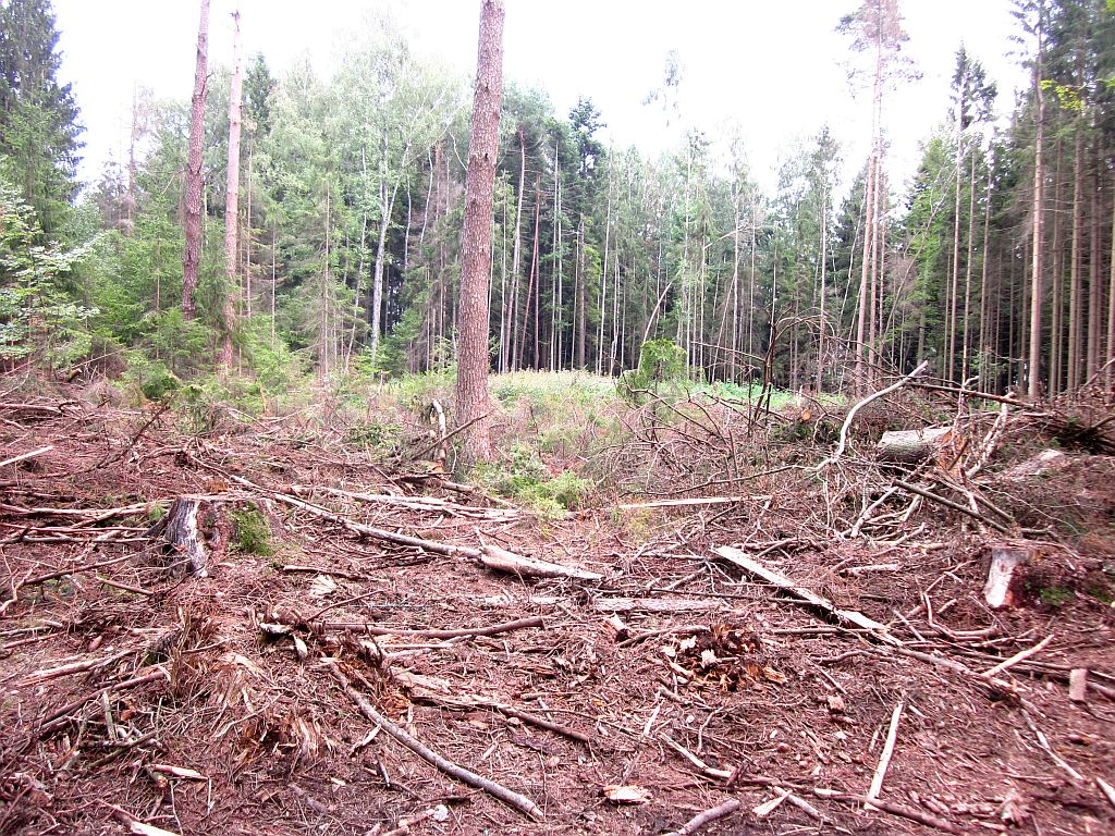 Wald im Waldviertel