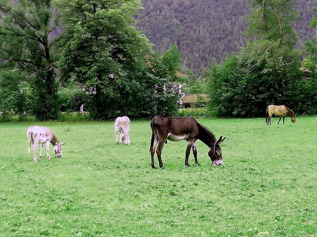 Eselwanderung am Tegernsee