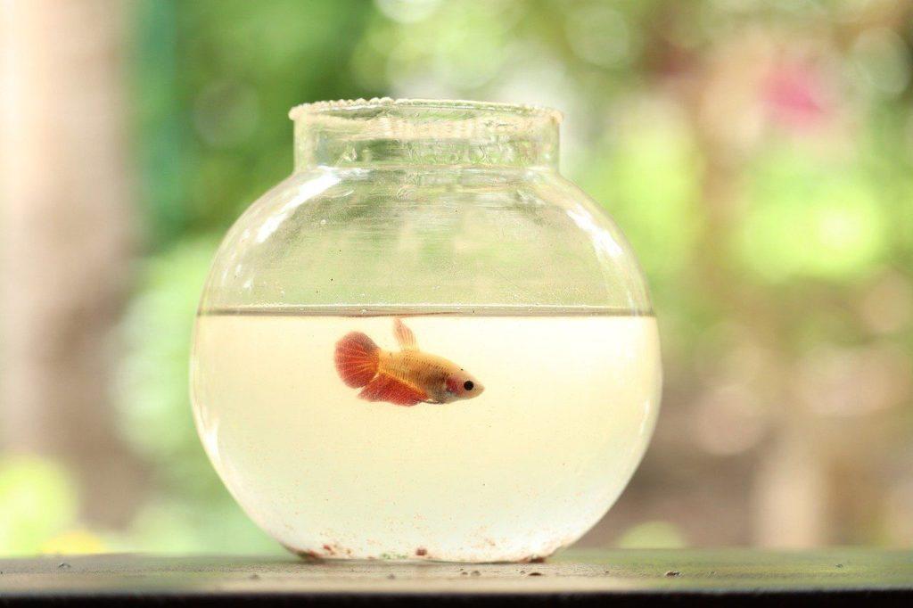 Georg reist im Marmeladenglas